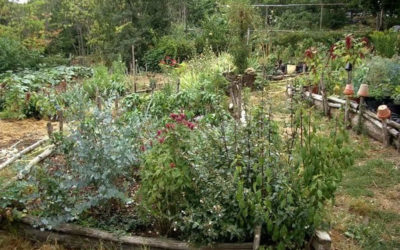How to Create a Sustainable Garden for your Family