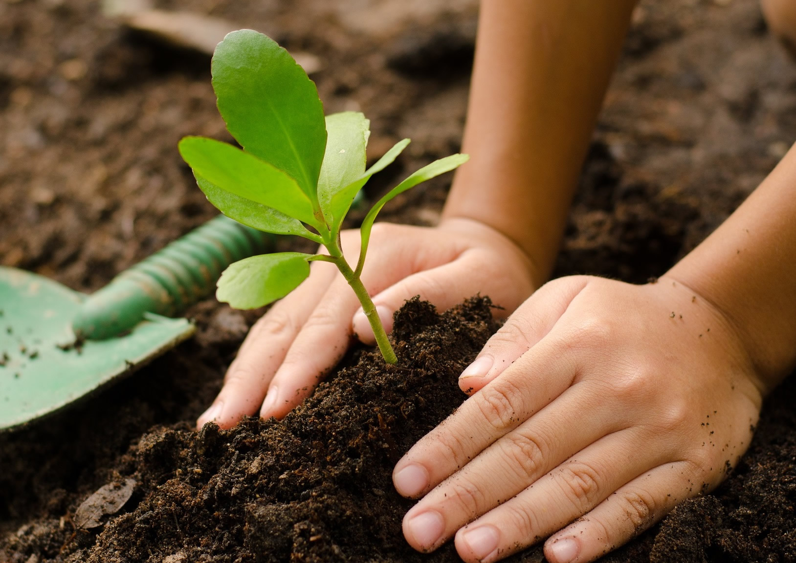 Volunteers Needed For Tree Planting Zanker Recycling
